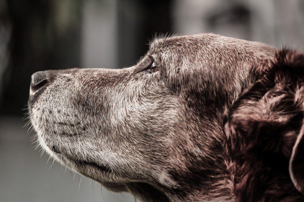 dog, hybrid, crete