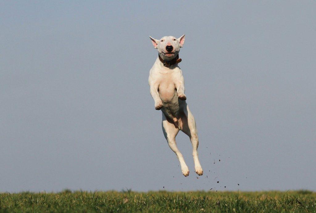 Basic dog training is fun